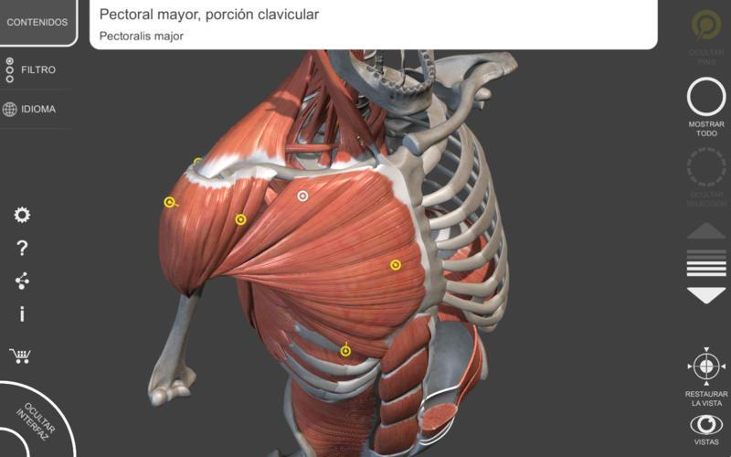 Sistema Muscular - 3D Atlas de Anatomía - Huesos y músculos del ...
