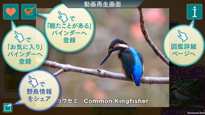 Screenshot for GPS動く野鳥図鑑400 in Japan App Store