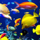 Sea Life Videos - Ocean &amp; Marine Creatures