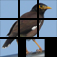 aQs Pro Slider Puzzle: iLove Birds