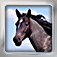 Horses Flip: Flashcards of Horse Breeds