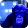 IQ Champ - Are you smarter than a chimp? (SALE)