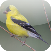 Backyard Birds of America icon