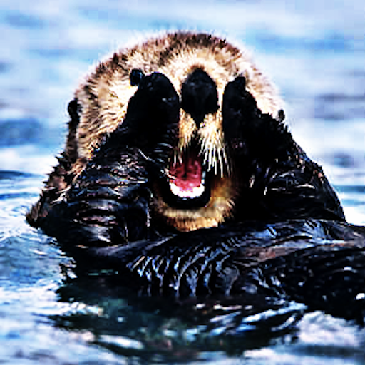 Sea Otters - The Ocean's Furry Friend