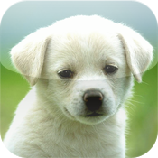 Dogs Encyclopedia icon