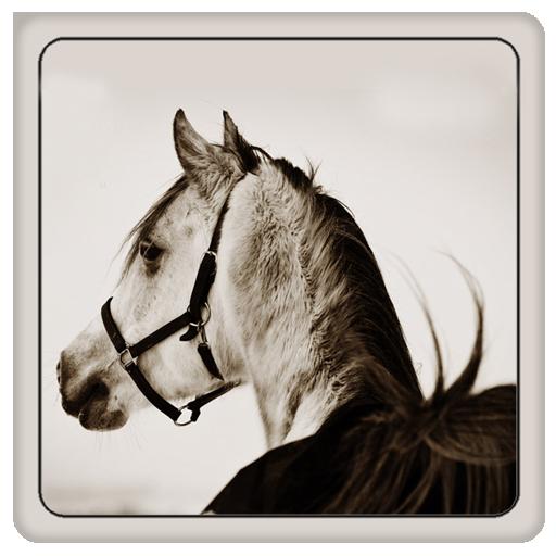Horse Book**