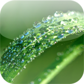 Medicinal Plants for iPhone icon