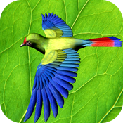 Forest Birds icon