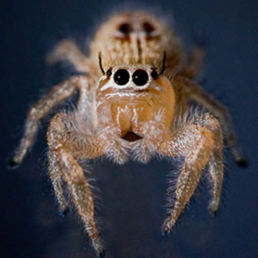 Araña que habla