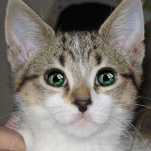 Gato Parlante