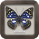 日本のチョウ|図鑑NEO for iPhone