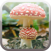Mushrooms - Gallery icon