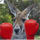 A  Boxing & Talking Kangaroo - Watch out for the countdown - Merry Christmas!