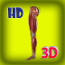 3D Human Leg Muscle Pro
