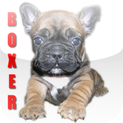 Boxers Dog Fun icon