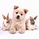 癒しの日めくりカレンダー『犬』篇