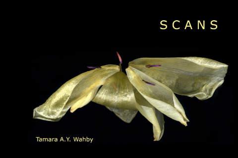 Scans von Tamara A.Y. Wahby