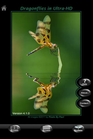 Dragonflies in Ultra-HD