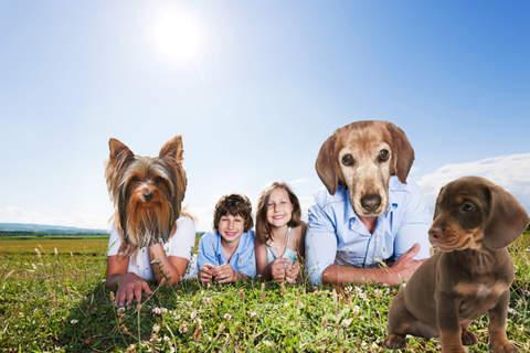 Dogify Your Photo