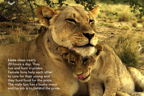 The Lion and other Wild Animals