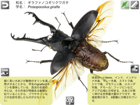 The 3D昆虫/カブトムシ・クワガタムシ編 for iPad