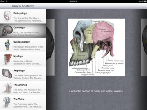 Gray Anatomy - Flash Cards