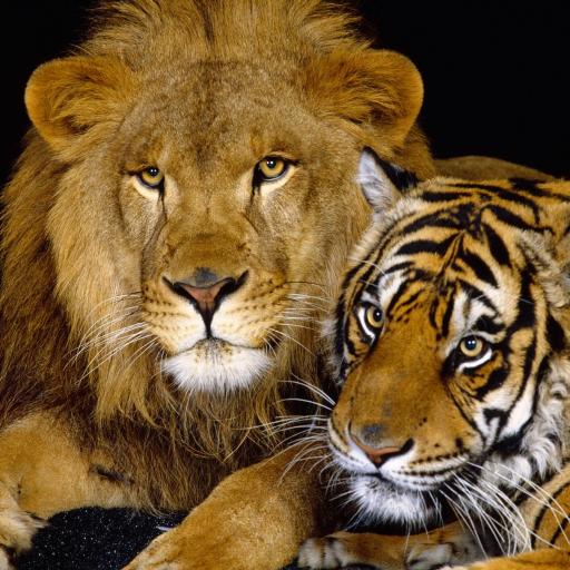 Animals Reign