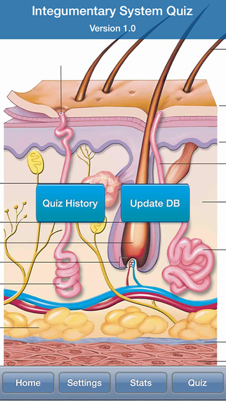 Human Biology : Integumentary System Quiz