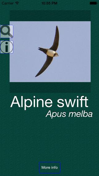 UK Birds Dictionary Pro