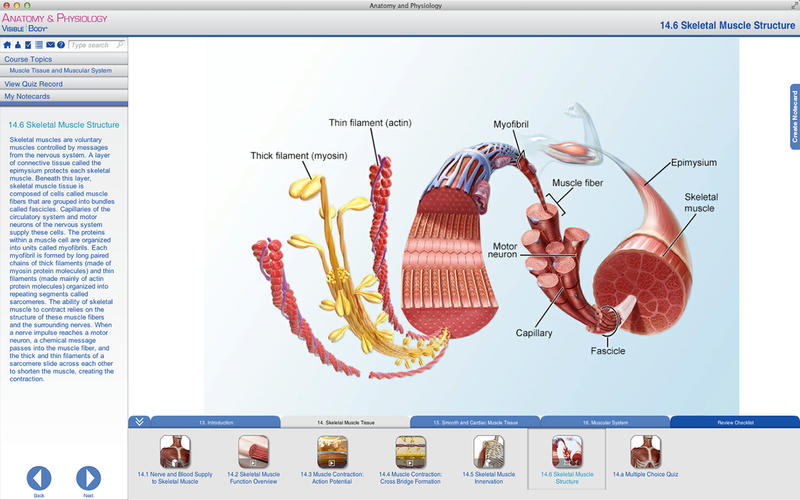 Anatomy and Physiology Screenshot - 2