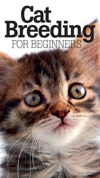 Cat Breeding For Beginners