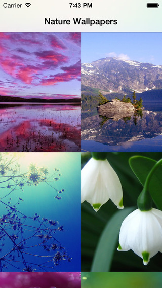 Amazing Natures Wallpapers