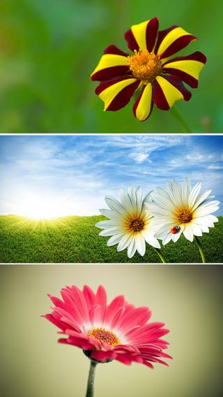 ipad lock screen flower button download