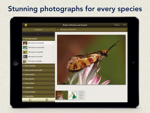 Moths & Butterflies of Britain & Ireland iPad Screenshot 1