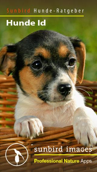Hunde Id - Welcher Hund passt zu mir Sunbird Ratgeber zur Auswahl der passenden Hunderasse