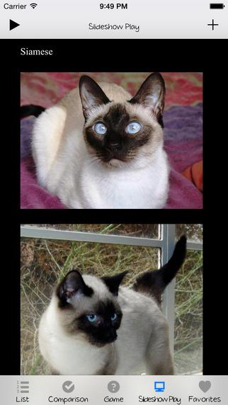 Cat Breeds Encyclopedia