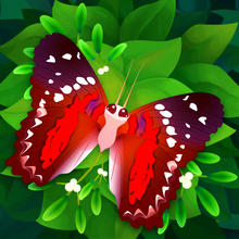Flutter: Butterfly Sanctuary - iOS Store App Ranking and App Store Stats