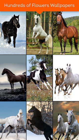 Awesome Dream Horse Wallpapers HD - Collections of All Beautiful Horses Pictures