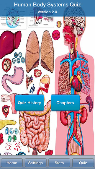 Human Body Systems Quiz