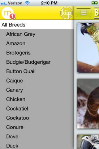 BirdRescue screenshot 4