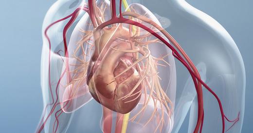 ERC AR Heart