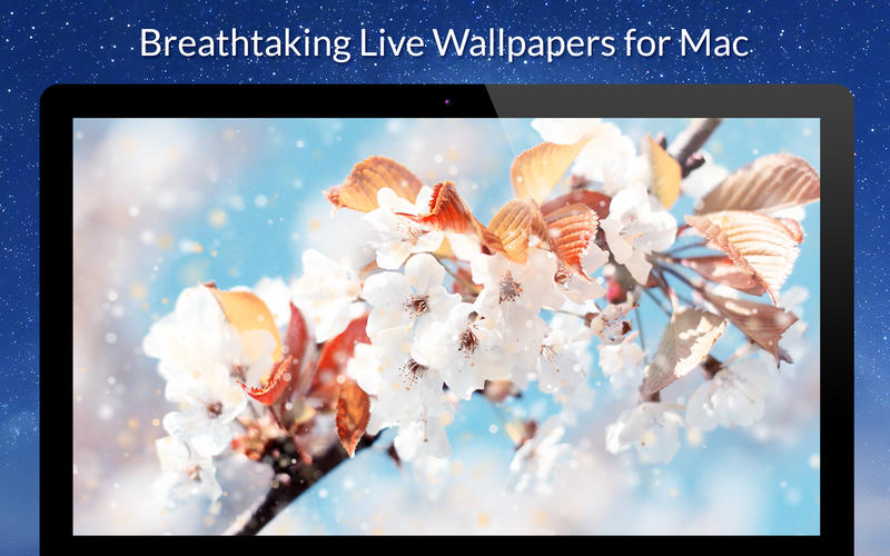 Live VideoWall Lite Screenshot - 1