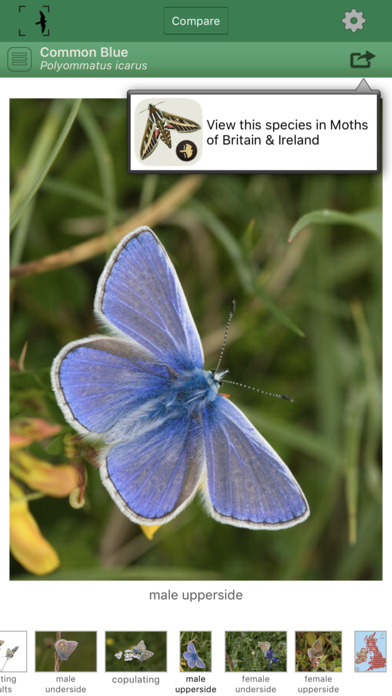 Butterflies of Britain and Ireland iPhone Screenshot 3