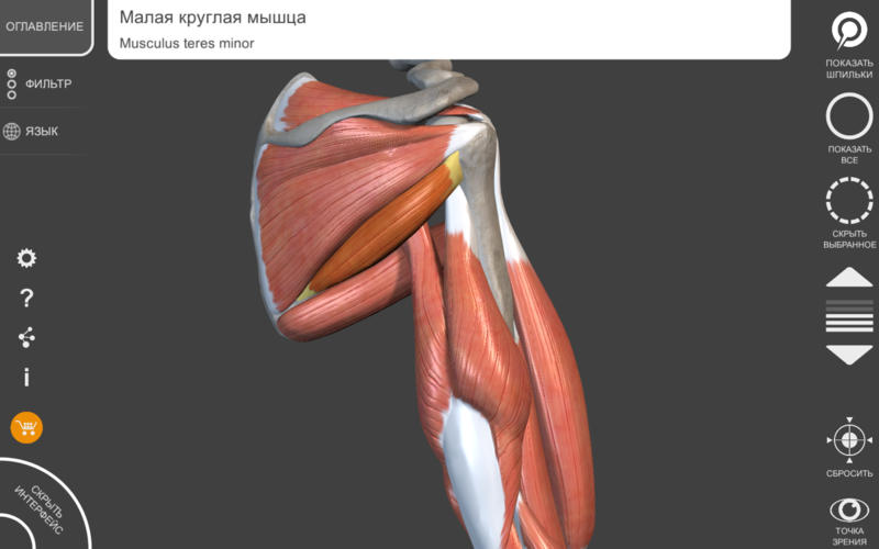 3D anatomy software by Anomalous Medical