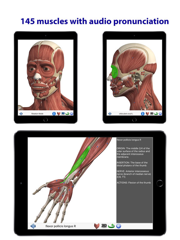 Visual Anatomy Screenshots