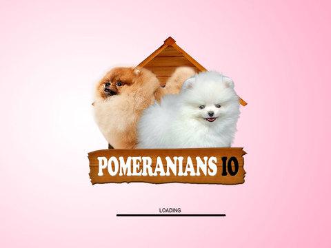 Pomeranians IO screenshot 8
