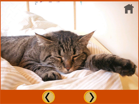 cats trapshooting for kids vip iPad Screenshot 4