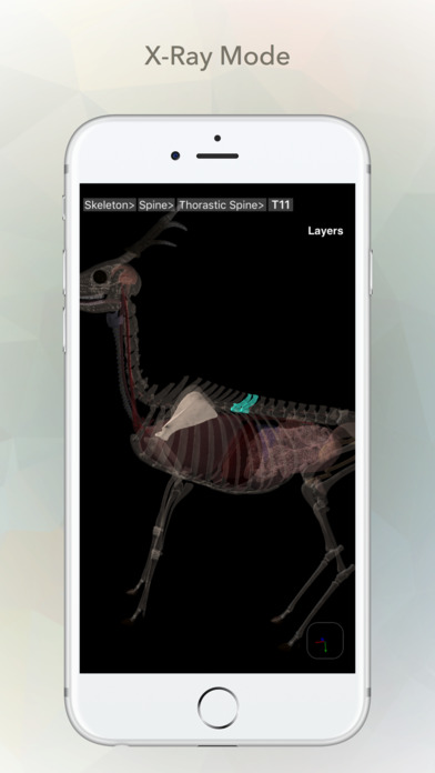 Deer Anatomy Screenshots