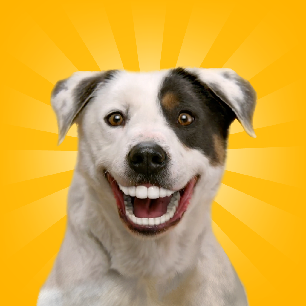 Dogs with dentures