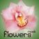 Amazing Flower Mask